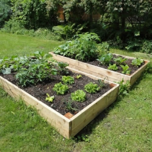 Raised Garden Beds Tanalised Timber   2.4m (8ft) X 1.2m (4ft